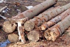 Os troncos aproximam a estrada Fotografia de Stock Royalty Free