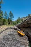 Os troncos e as cascas de Cuttes em uma montanha ajardinam Fotografia de Stock