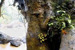 Os troncos e as folhas da planta estão molhados após a chuva imagens de stock
