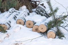 Os troncos vistos Fotos de Stock Royalty Free