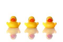 Os três patos Imagens de Stock Royalty Free