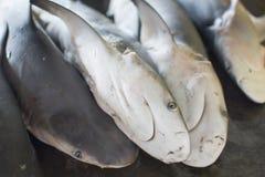 Os tubarões pequenos para a venda por atacado no mercado de peixes frescos Foto de Stock