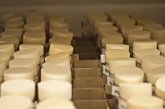Os tubos de ensaio com drosófila voam Fotos de Stock