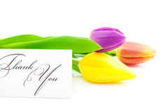Os tulips coloridos e um cartão assinado agradecem-lhe Imagem de Stock Royalty Free