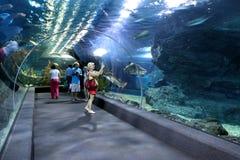 Os turistas andam e veem a vida marinha do aquário em Banguecoque imagem de stock