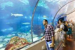 Os turistas apreciam o aquário - Barcelona, Espanha imagem de stock royalty free
