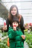Os turistas, a mãe e a filha asiáticos estão felizes com o gosto da morango fresco na exploração agrícola da morango, curso a Cor fotos de stock royalty free