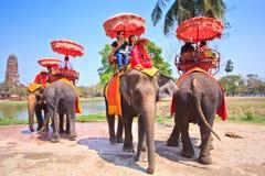 Os turistas montam elefantes na província de Ayutthaya de Tailândia Imagem de Stock