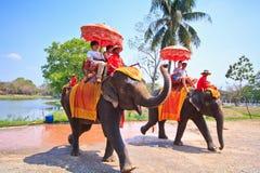 Os turistas montam elefantes na província de Ayutthaya de Tailândia Fotografia de Stock