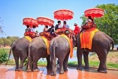 Os turistas montam elefantes na província de Ayutthaya de Tailândia Fotografia de Stock Royalty Free