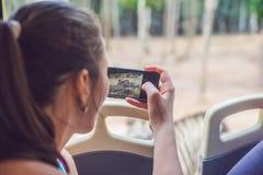 Os turistas olham os animais do ônibus no parque do safari imagens de stock royalty free