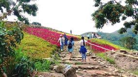 Os turistas visitam o campo de flores colorido da montanha filme