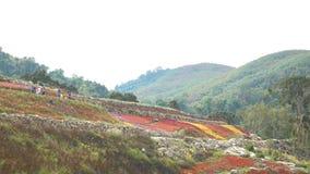 Os turistas visitam o campo de flores colorido da montanha vídeos de arquivo