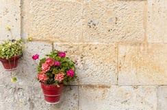 Os vasos de flores em uma parede feita de pedra com gerânio florescem para a decoração Fotos de Stock Royalty Free