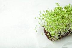 Os vegetais crus, vivos brotaram das sementes orgânicas de alta qualidade da planta para a nutrição saudável e dietética Copie o  foto de stock royalty free