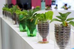Os vegetais orgânicos Imagem de Stock Royalty Free