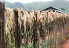 Os vegetais secados? fazem o cozimento fácil Imagem de Stock