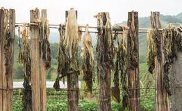 Os vegetais secados? fazem o cozimento fácil Imagens de Stock