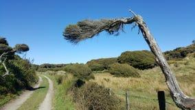 Os ventos dão forma a árvores em formulários bonitos no ponto da inclinação, Nova Zelândia foto de stock