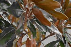 Os verdes e os marrons nas folhas bonitas fecham-se acima Fotos de Stock