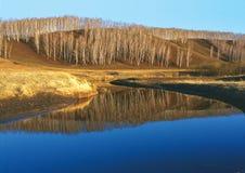 Os vidoeiros refletiram na superfície azul da água Foto de Stock