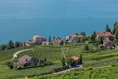 Os vinhedos aproximam o lago Leman imagens de stock royalty free