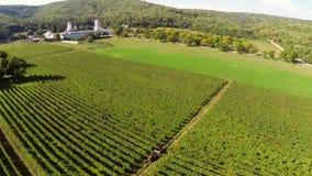 Os vinhedos bonitos ajardinam com o monastério no fundo, vista aérea video estoque