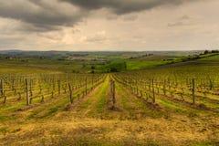 Os vinhedos de Tuscan Imagens de Stock