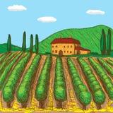 Os vinhedos italianos pintaram com um toque da cor Ilustra??o do vetor ilustração stock