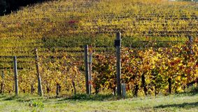 Os vinhedos modelam no outono Fotografia de Stock Royalty Free