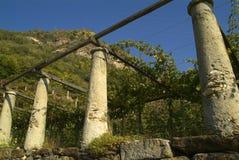 Os vinhedos na estrada velha chamaram através de Francigena Fotos de Stock Royalty Free