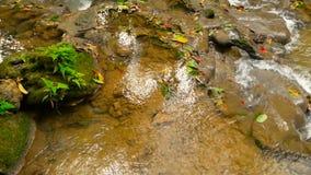 Os volume de água claros conectam para baixo da corredeira do waterall na floresta úmida tropical vídeos de arquivo