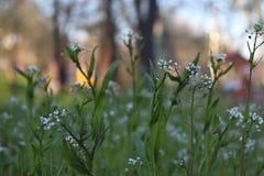 Os Wildflowers ajardinam o bom tempo feliz fotos de stock