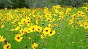 Os wildflowers amarelos colocam mover-se no vento filme