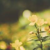 Os wildflowers bonitos feitos com um vintage macio filtram Imagem de Stock Royalty Free