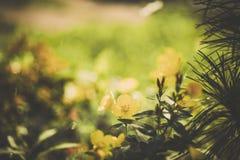 Os wildflowers bonitos feitos com um vintage macio filtram Imagens de Stock Royalty Free