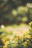 Os wildflowers bonitos feitos com um vintage macio filtram Fotos de Stock