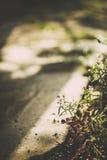 Os wildflowers bonitos feitos com um vintage macio filtram Fotografia de Stock