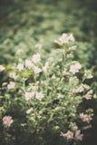 Os wildflowers bonitos feitos com um vintage macio filtram Fotos de Stock Royalty Free