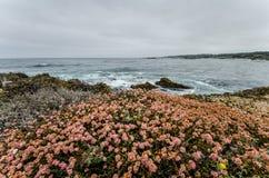 Os wildflowers cor-de-rosa crescem perto do litoral do Oceano Pacífico em Califórnia ao longo da estrada da Costa do Pacífico Dia fotografia de stock royalty free