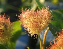 Os Wildflowers florescem em uma forma do coração Fotografia de Stock Royalty Free