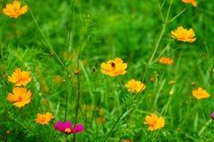 Os Wildflowers na brisa com tropeçam a abelha Foto de Stock
