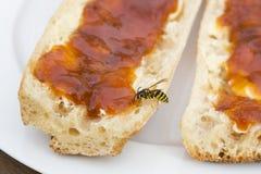 Osa na plasterku chleb i dżem Obrazy Royalty Free