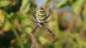 Osa pająk W Swój sieci W Ukraina zbiory