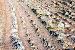 Osadowe skały w Zumaia wymieniali Flisz Obrazy Stock