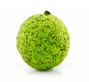 Osage Orange (Maclura) Isolated on White Stock Photo