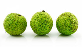 Osage Orange (Maclura) Isolated on White Royalty Free Stock Image