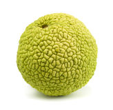 Osage orange Royalty Free Stock Photos