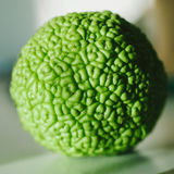 Osage Orange on a table Stock Images