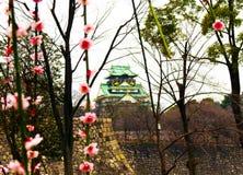 Osaka Castle, ameixa floresce, Osaka, Japão Fotos de Stock Royalty Free